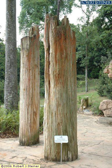 Singapore Botanic Gardens, Tree Trunks