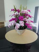 54b608139120f51c0ea5ab62_orchid-10.jpg