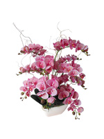 54b607e89120f51c0ea5ab50_orchid-4.jpg