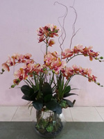 54b608077f72257c2dde535d_orchid-8.jpg