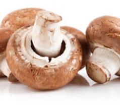 Champ Fungi Pte Ltd Photos