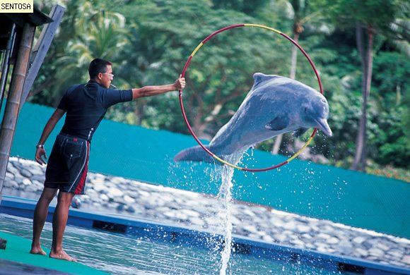 Dolphin Lagoon, Dolphin with Trainer